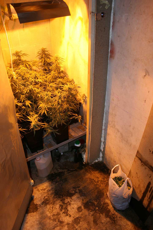 La polic a foral detiene a un vecino de sarriguren que ten a 30 plantas de marihuana en un trastero - Armarios de interior de marihuana ...