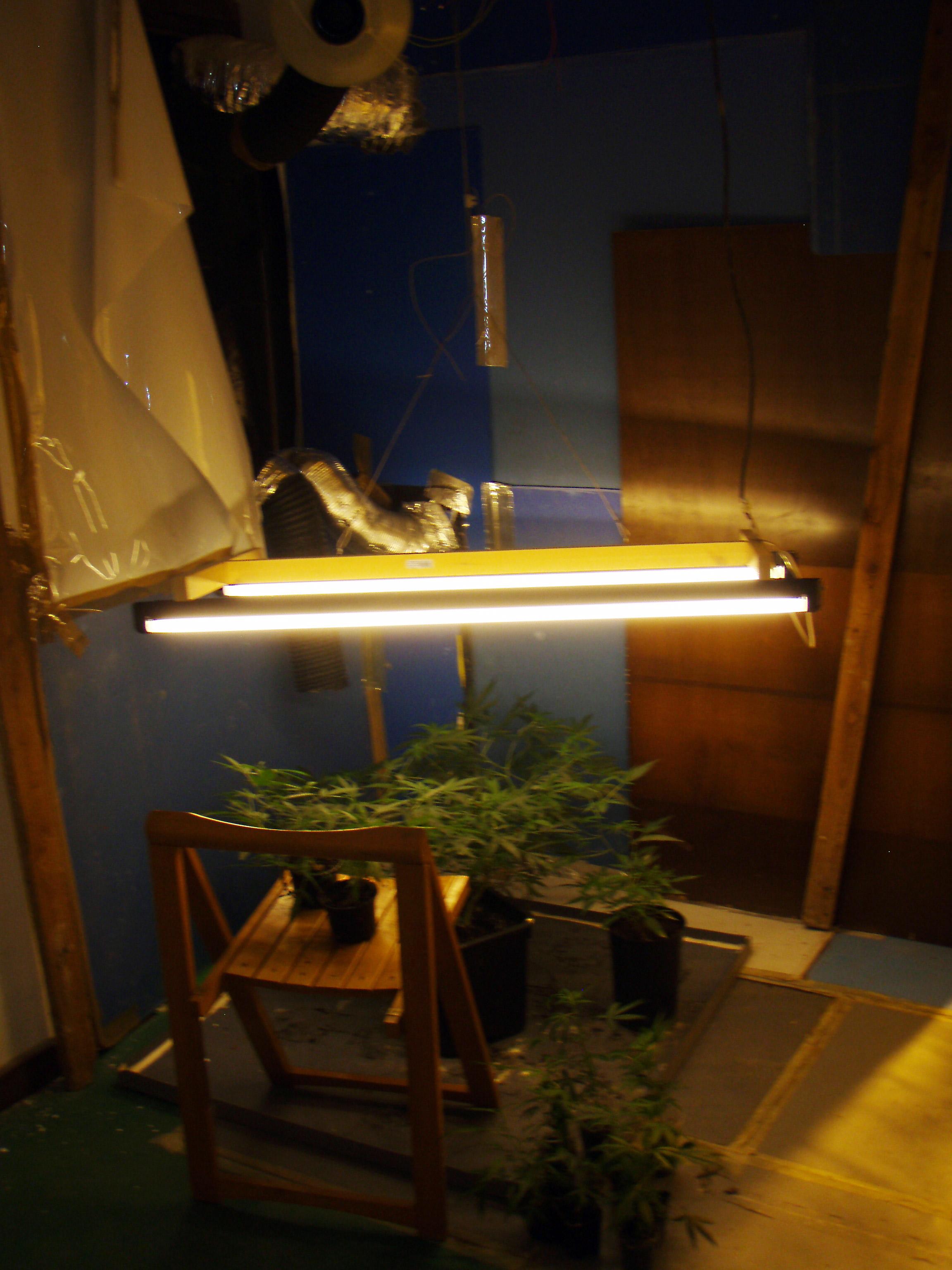 La polic a foral detiene a tres j venes por cultivar for Plantas marihuana interior