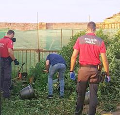 Detenidas tres personas por delitos contra la salud pública en Tudela