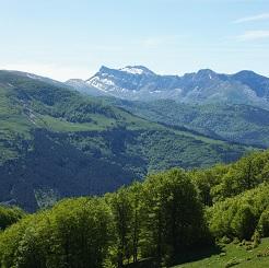 montes y bosques los bosques y montes de navarra